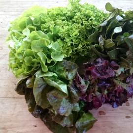 Salade CAT2 BIO FR Prov